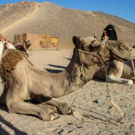 Египет (Хургада 2006 г)